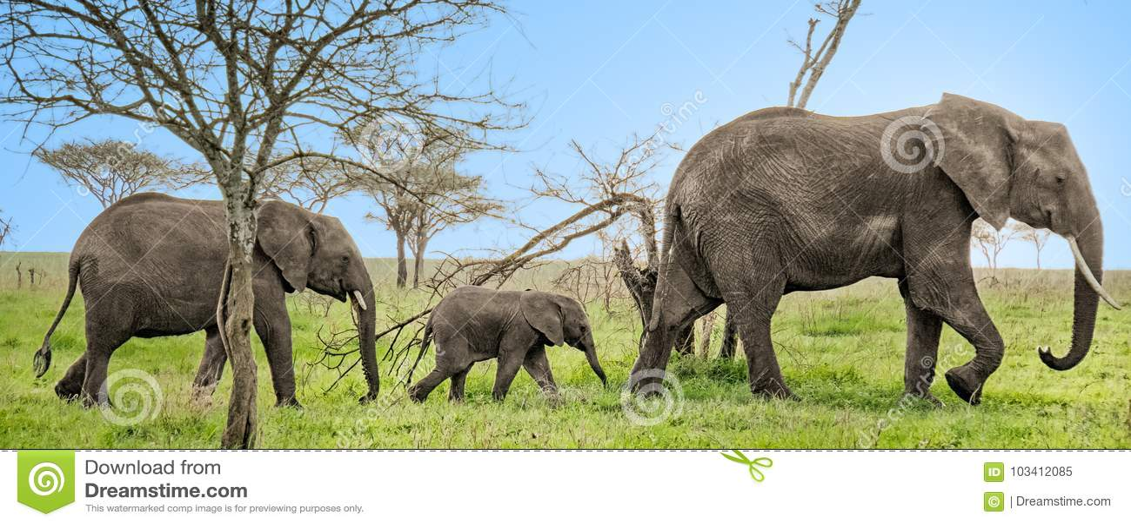 3 słonia wszystko z rzędu