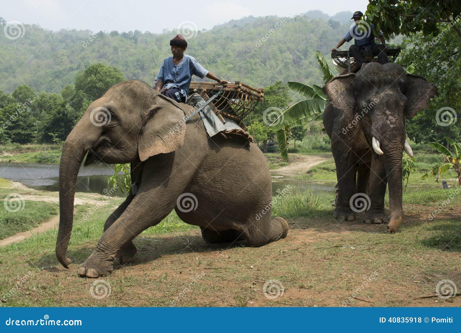 Słonie dla trekking