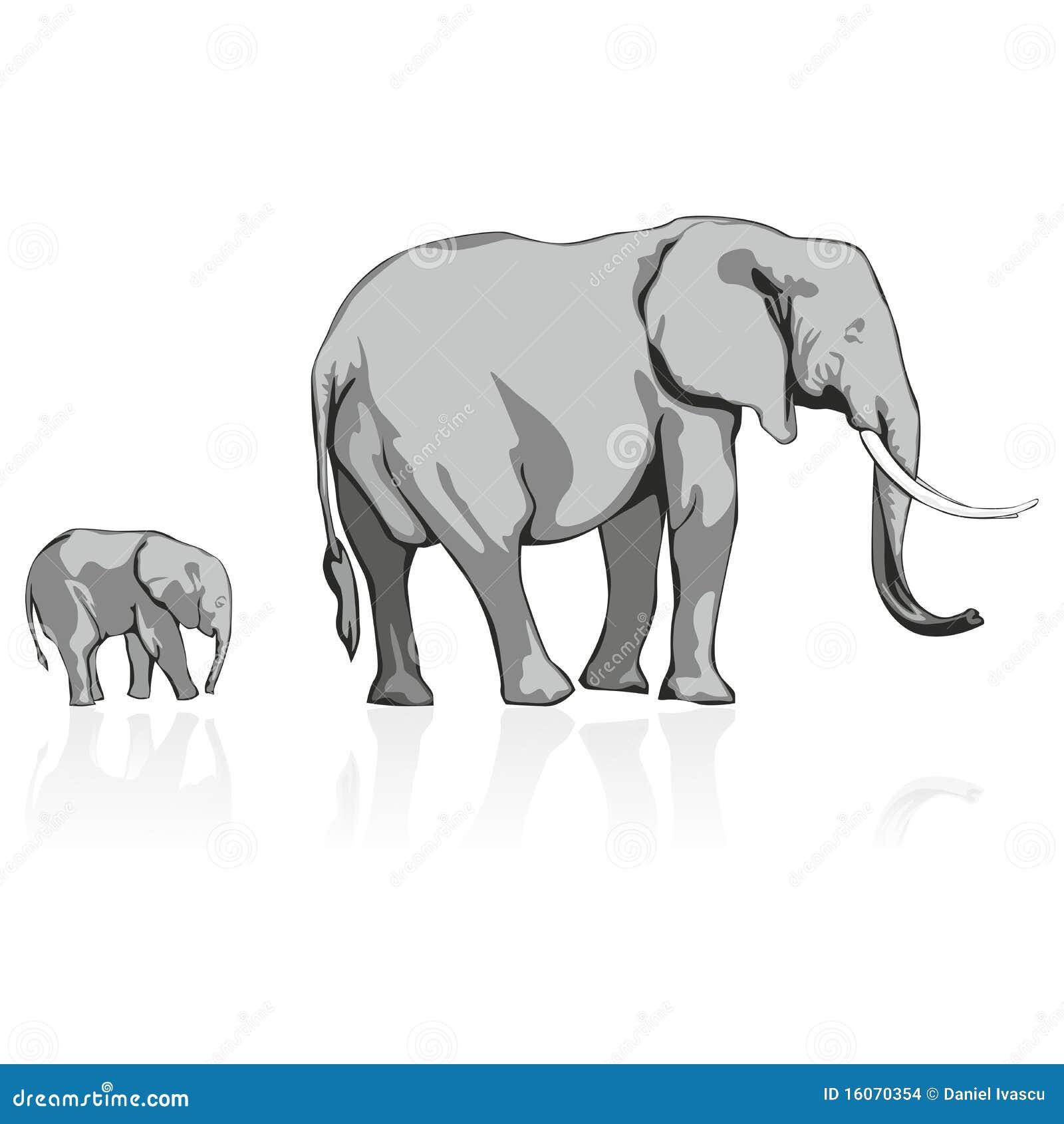 Słonie dzicy