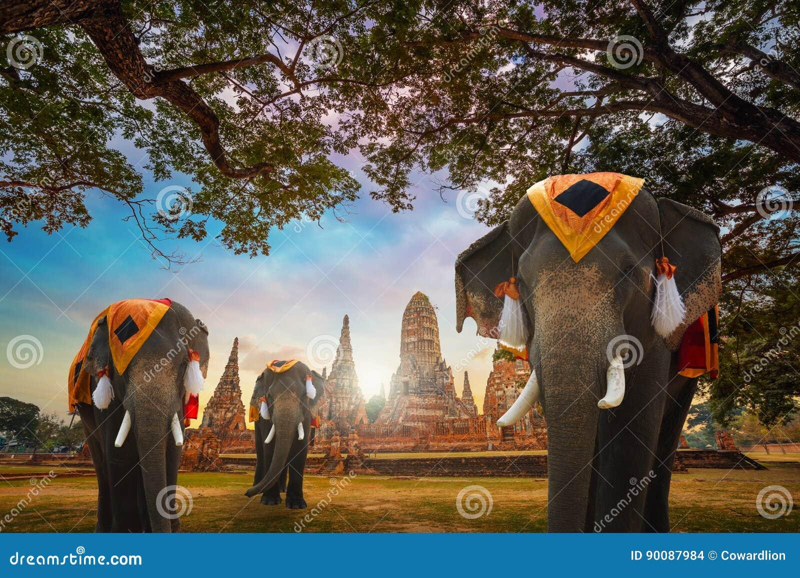 Słonie przy Wata Chaiwatthanaram świątynią w Ayuthaya Dziejowym parku, UNESCO światowego dziedzictwa miejsce, Tajlandia