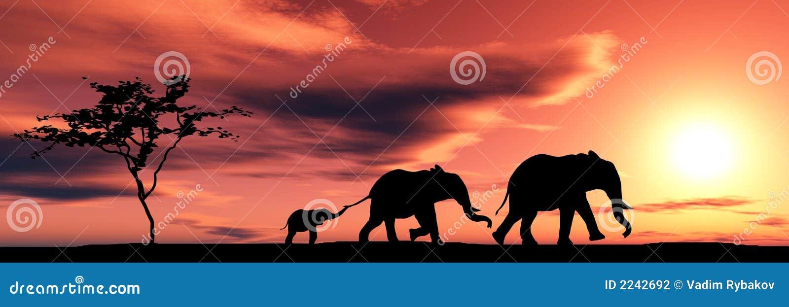 Słonie rodzinne