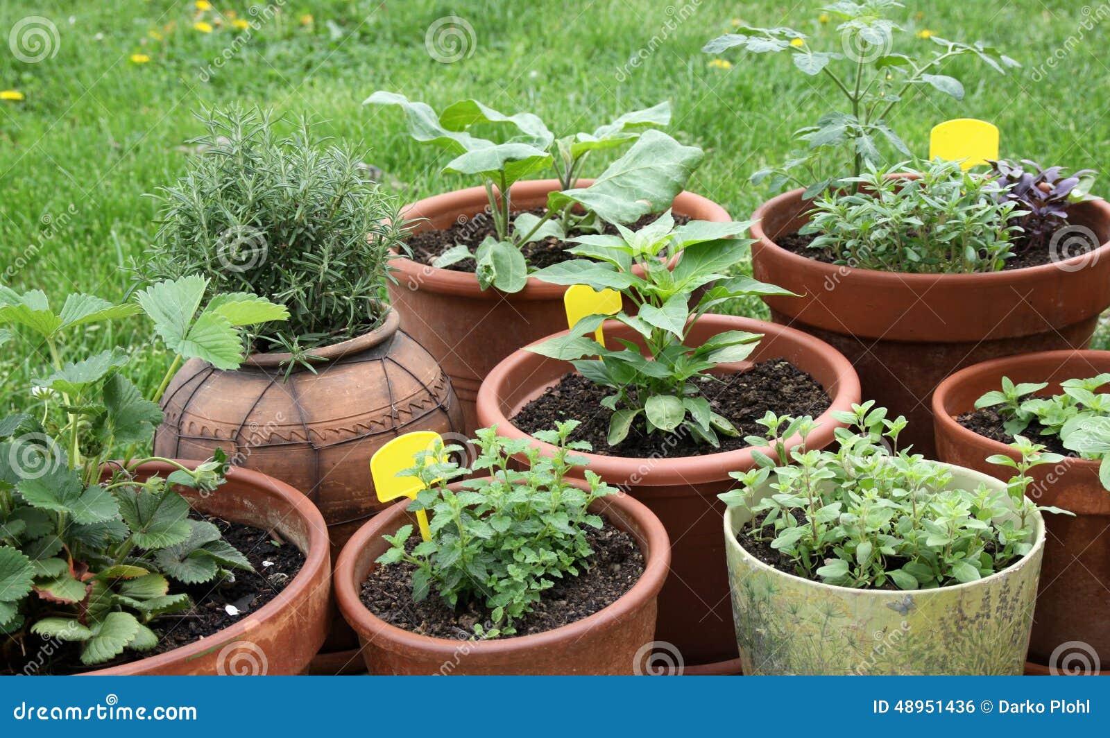 Plantes Aromatiques Sur Terrasse s'élevant végétal, herbes et plantes aromatiques dans des