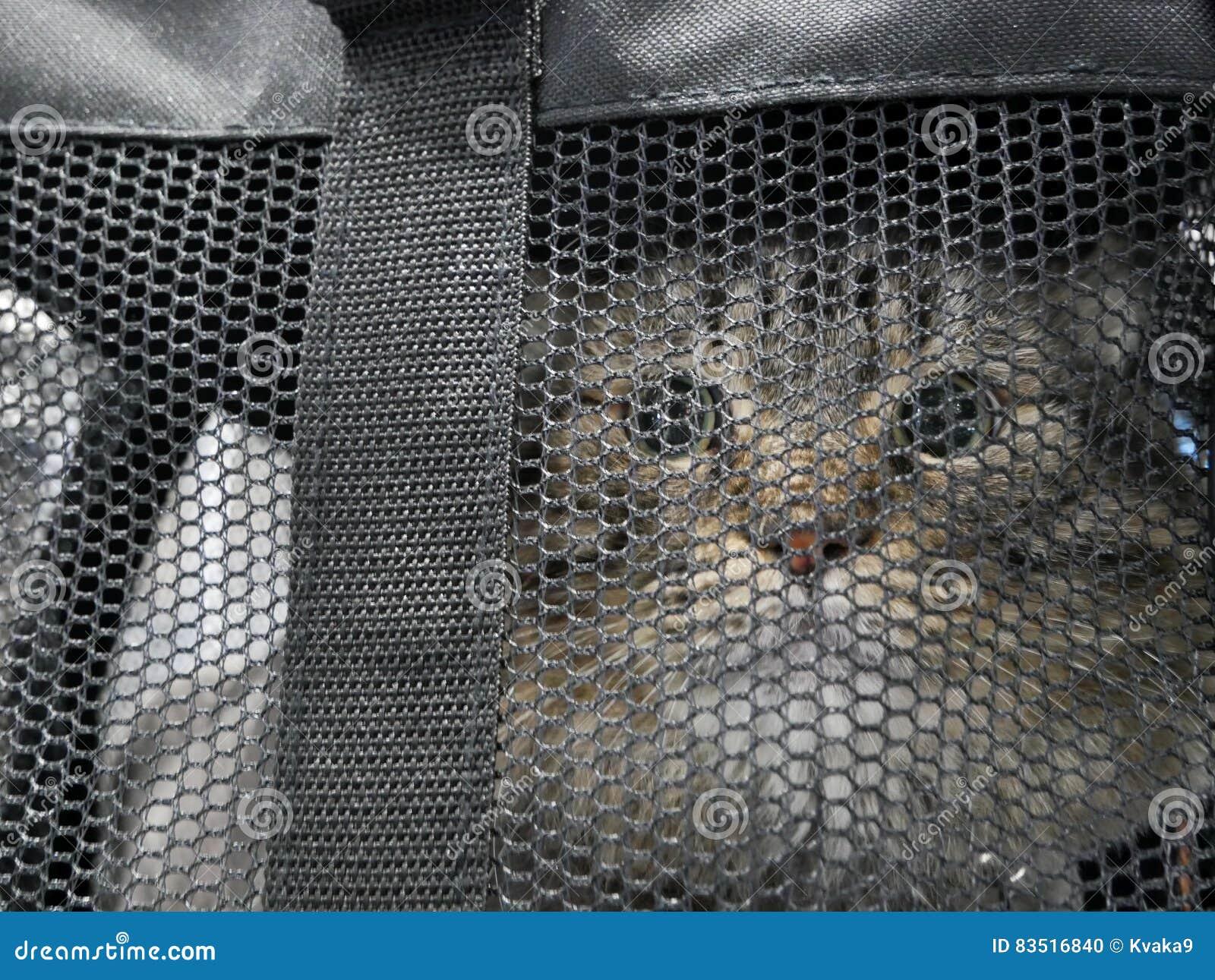 ` S de chat dans le sac
