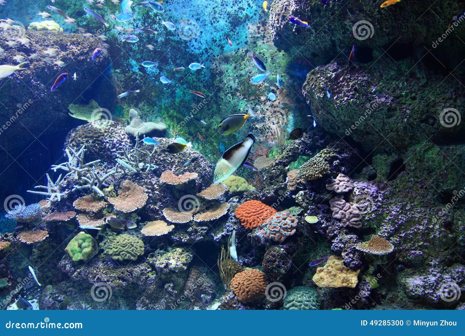 S E Un acquario Singapore