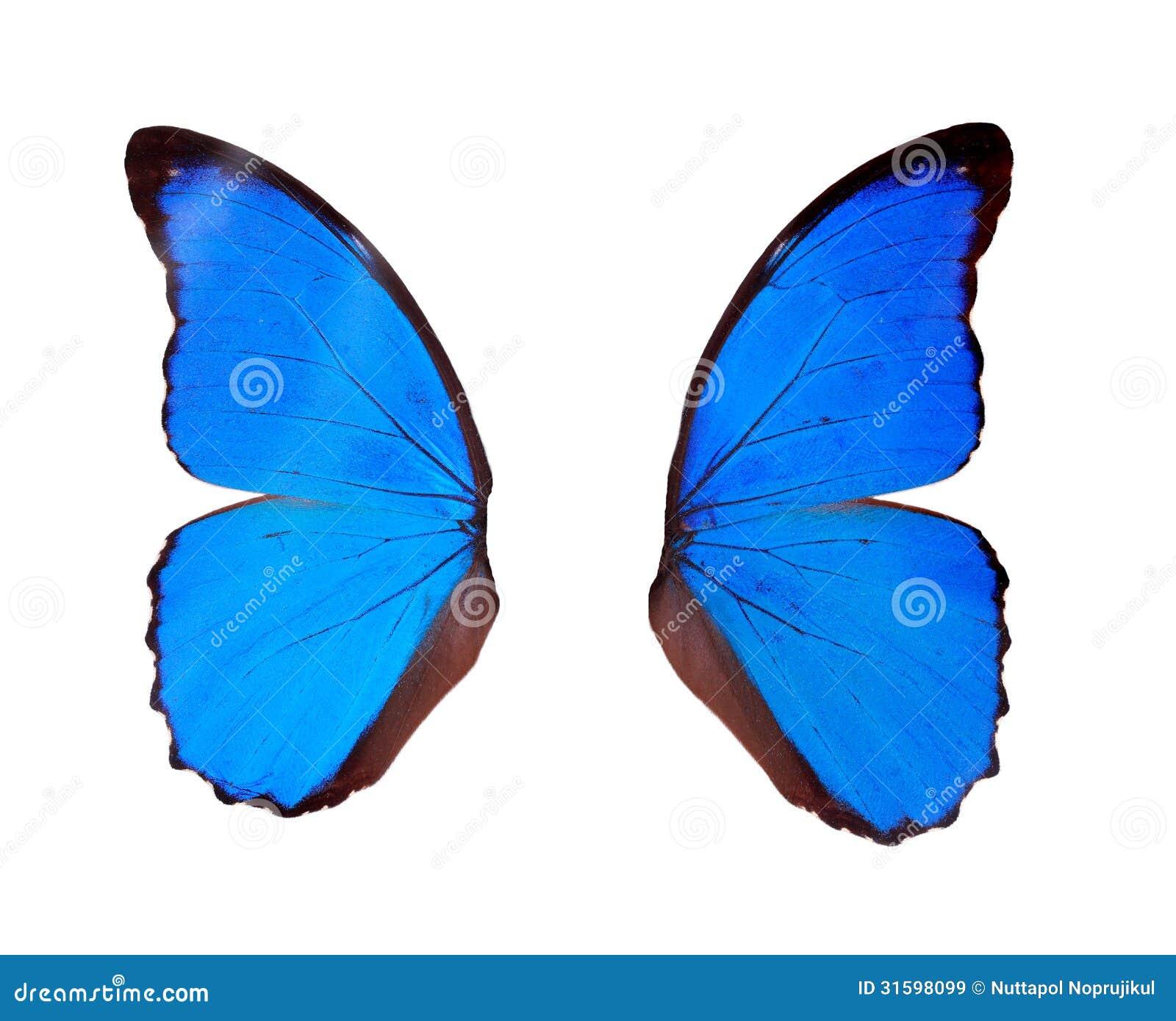 s 39 envole le papillon bleu d 39 isolement sur le blanc image. Black Bedroom Furniture Sets. Home Design Ideas
