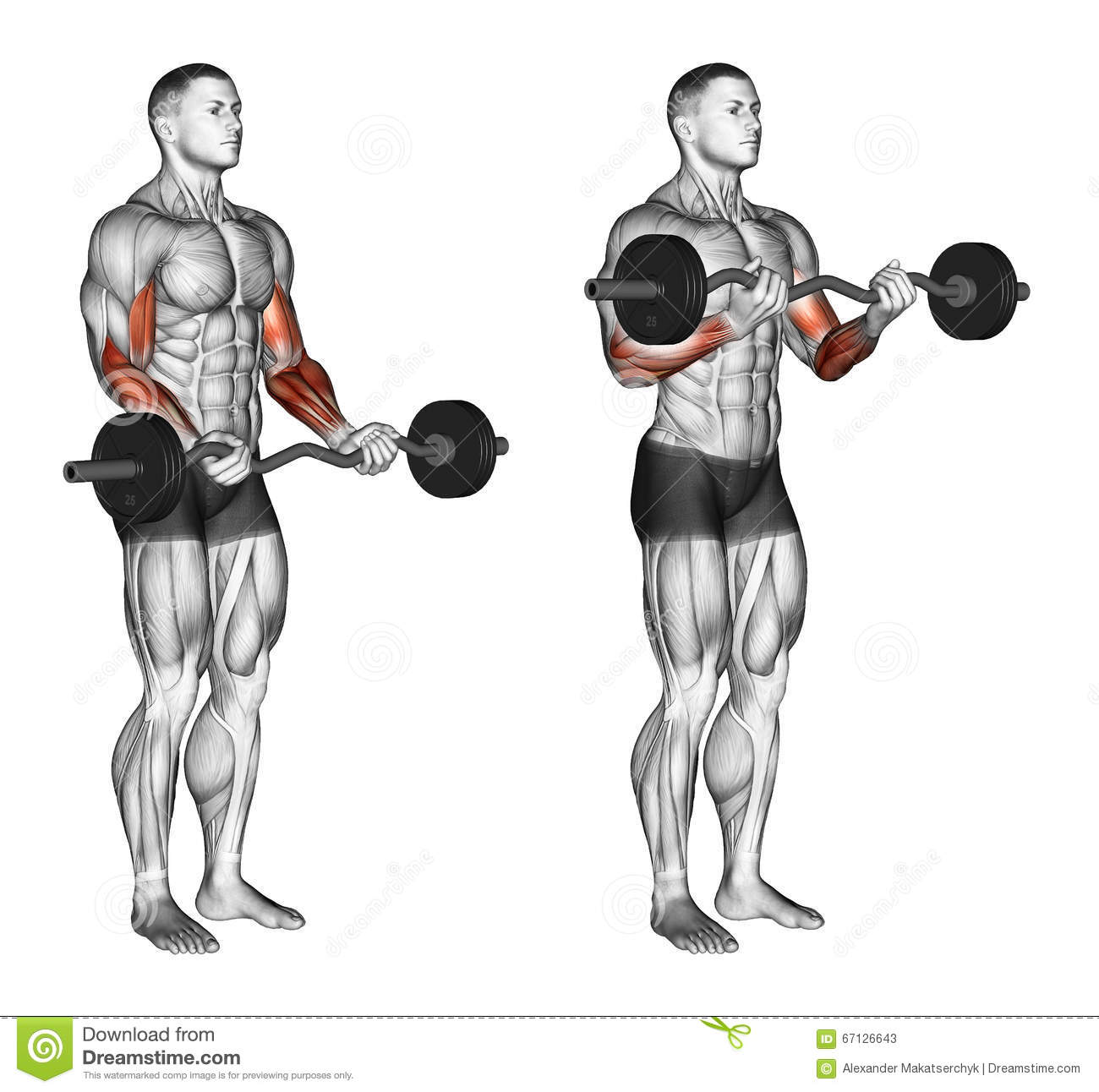 S'exercer Boucles De Barre D'EZ Illustration Stock - Image ...