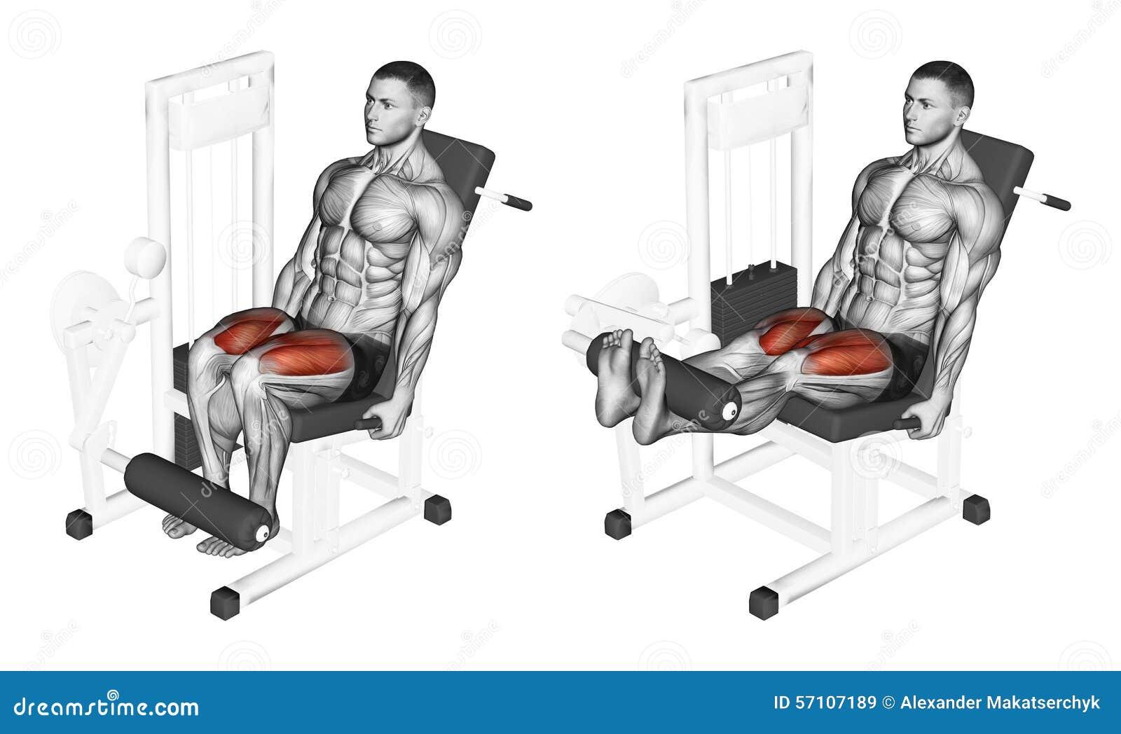 s 39 exercer extension de jambe dans le simulateur sur le quadriceps photo stock image 57107189. Black Bedroom Furniture Sets. Home Design Ideas
