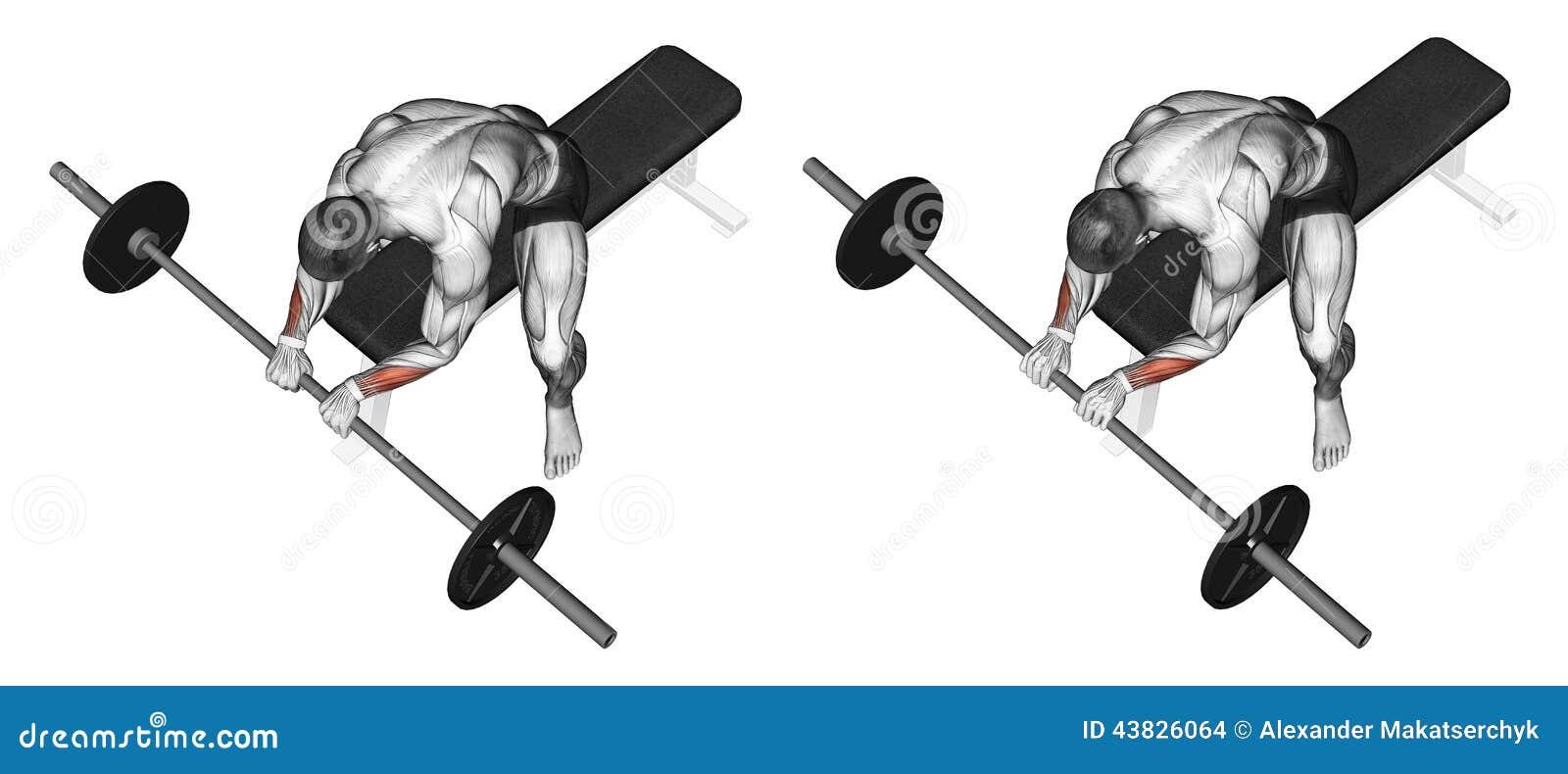 S exercer Extension du poignet avec une poignée de barbell sur le dessus