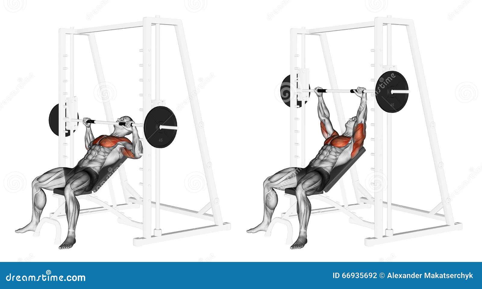 S Exercer Pente Smith Machine Bench Press Illustration