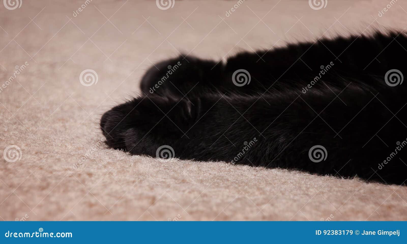 ` S Front Paws do gato preto no tapete