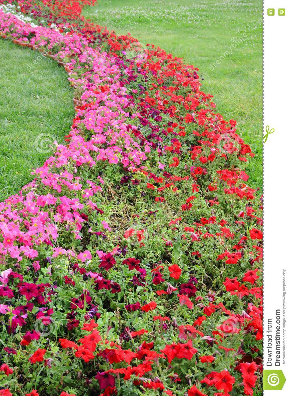 S shaped flower bed in meadow stock photo image 15090810 for Flower bed shapes designs