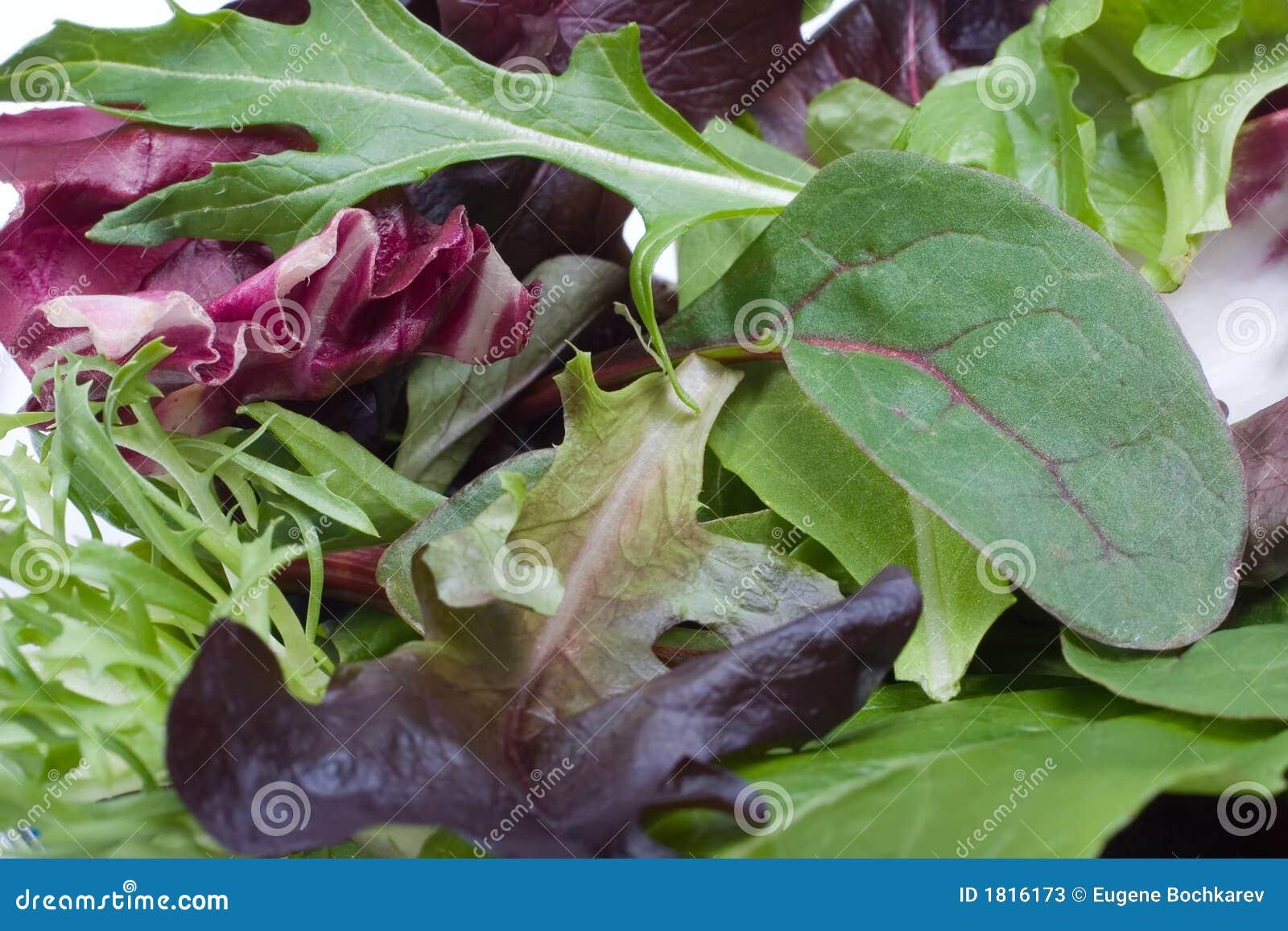 Sałatka organicznych