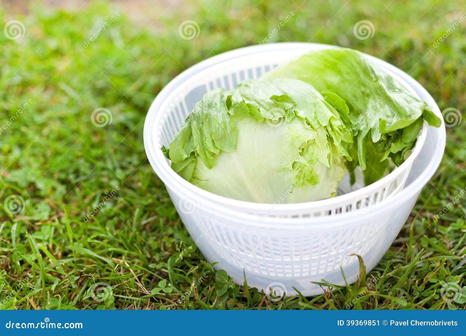 Sałaty sałatka w kądziołku
