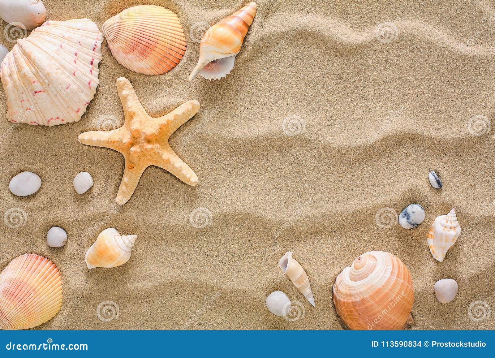 Sabbia Della Spiaggia Del Mare E Fondo Delle Conchiglie Pietre