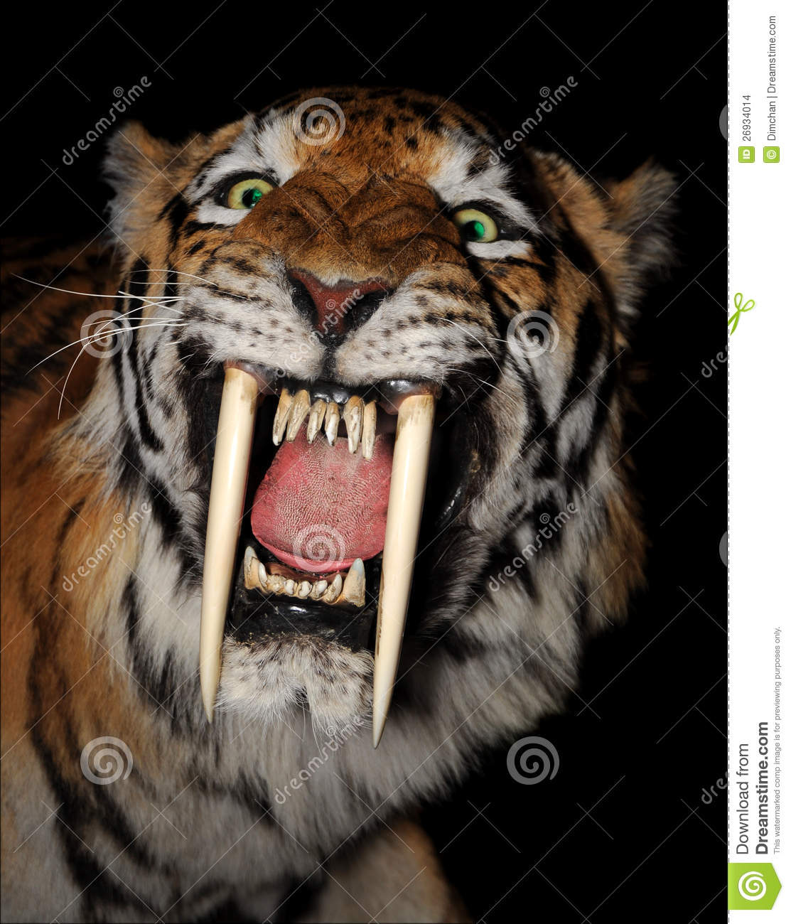 sabertoothed tiger face stock photo image of evil