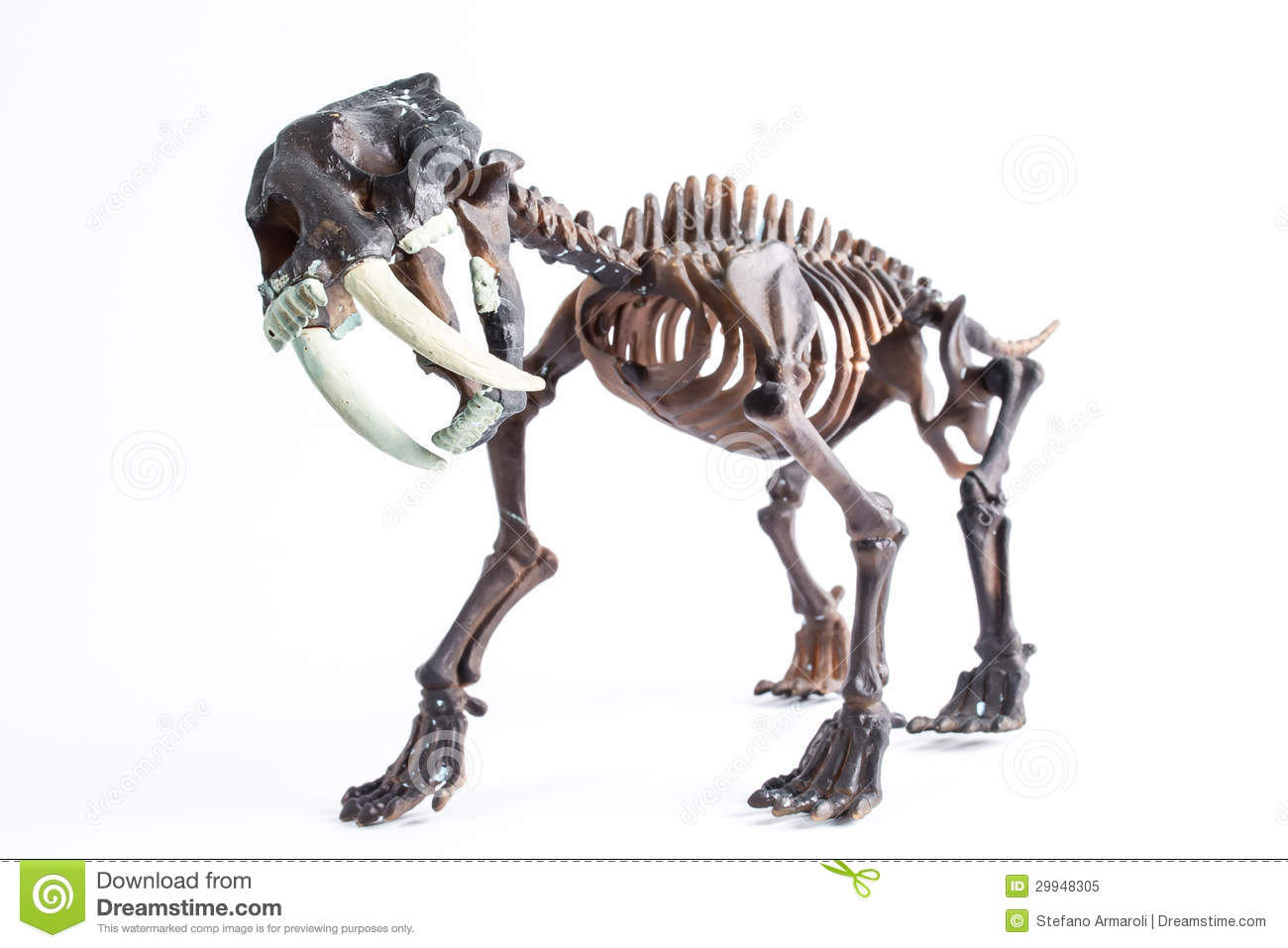 Saber-toothed tiger stock image. Image of saber, claw ...