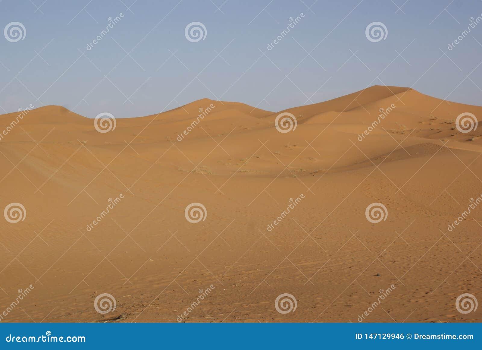 Sable et dunes dans le désert