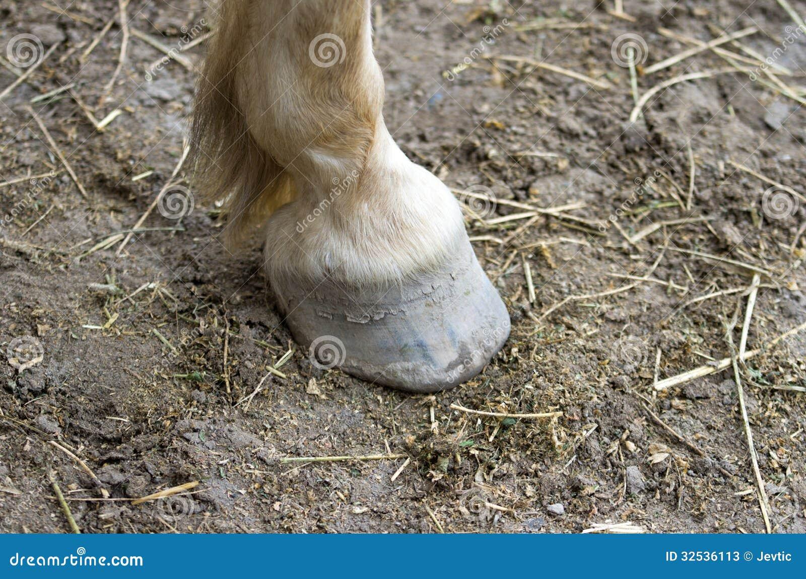 Sabot de cheval