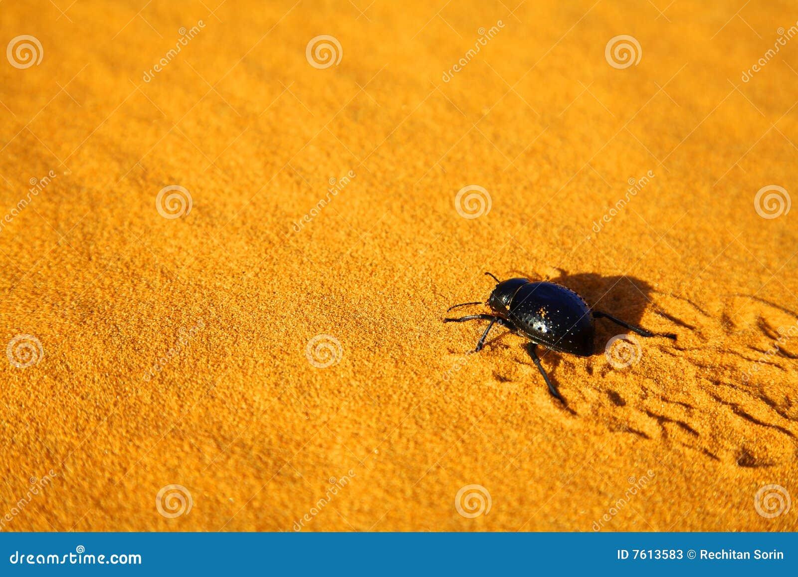 Sacer圣甲虫
