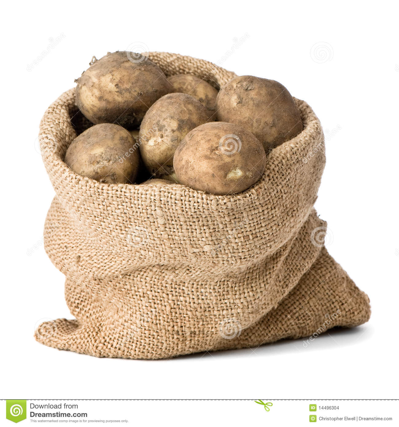 Burlap sack of freshly dug new potatoes on white background.