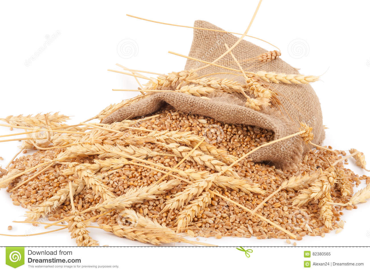 Sack of wheat grains stock image. Image of spikes, ready ...