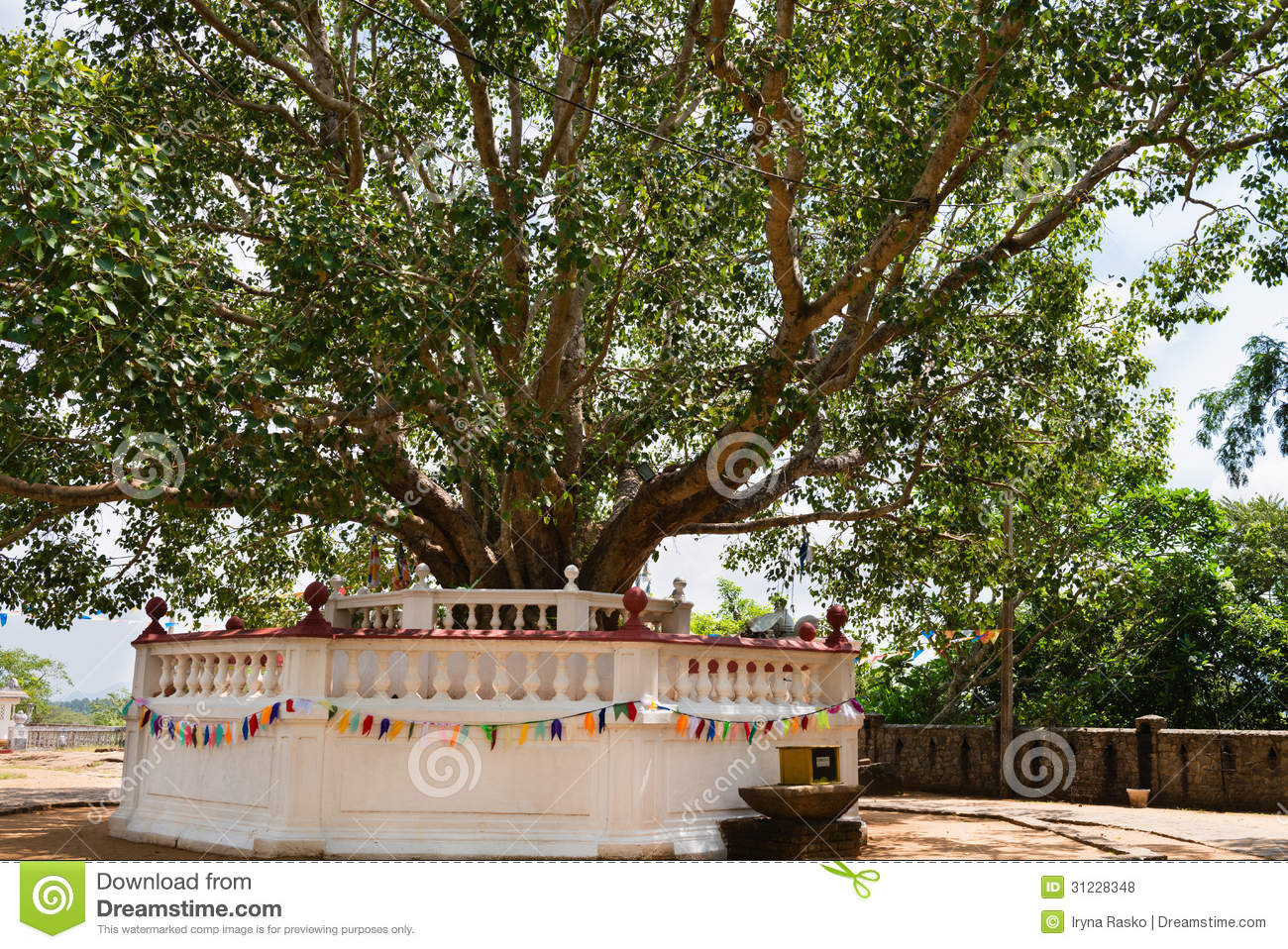 buddhist single men in sugar tree Fruits proverbs and quotes  only irish coffee provides in a single glass all four  i have tied my goat to a jujube tree the good men seem to be like .