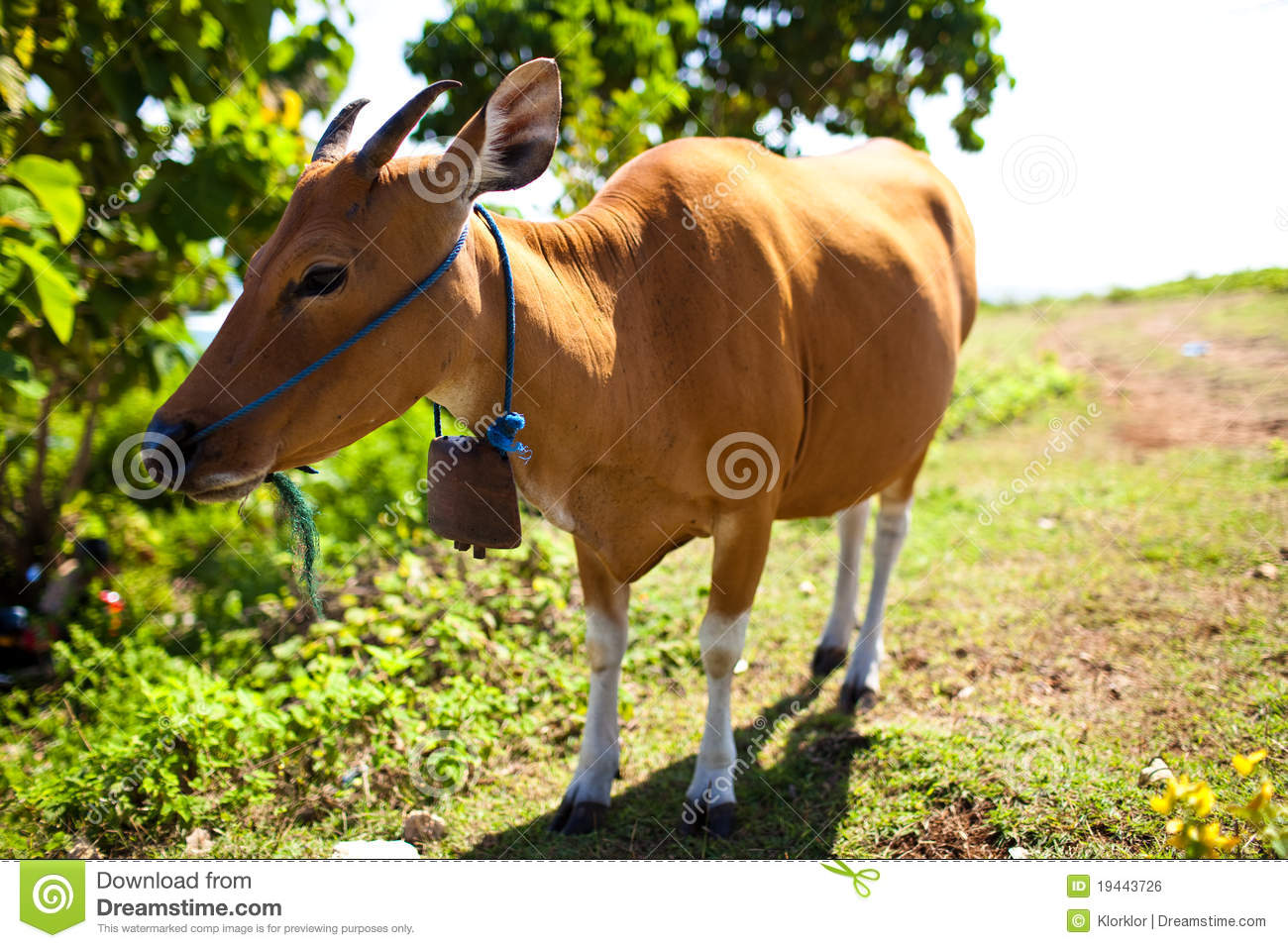 An analysis of how sacred a cow is in the religion of hinduism