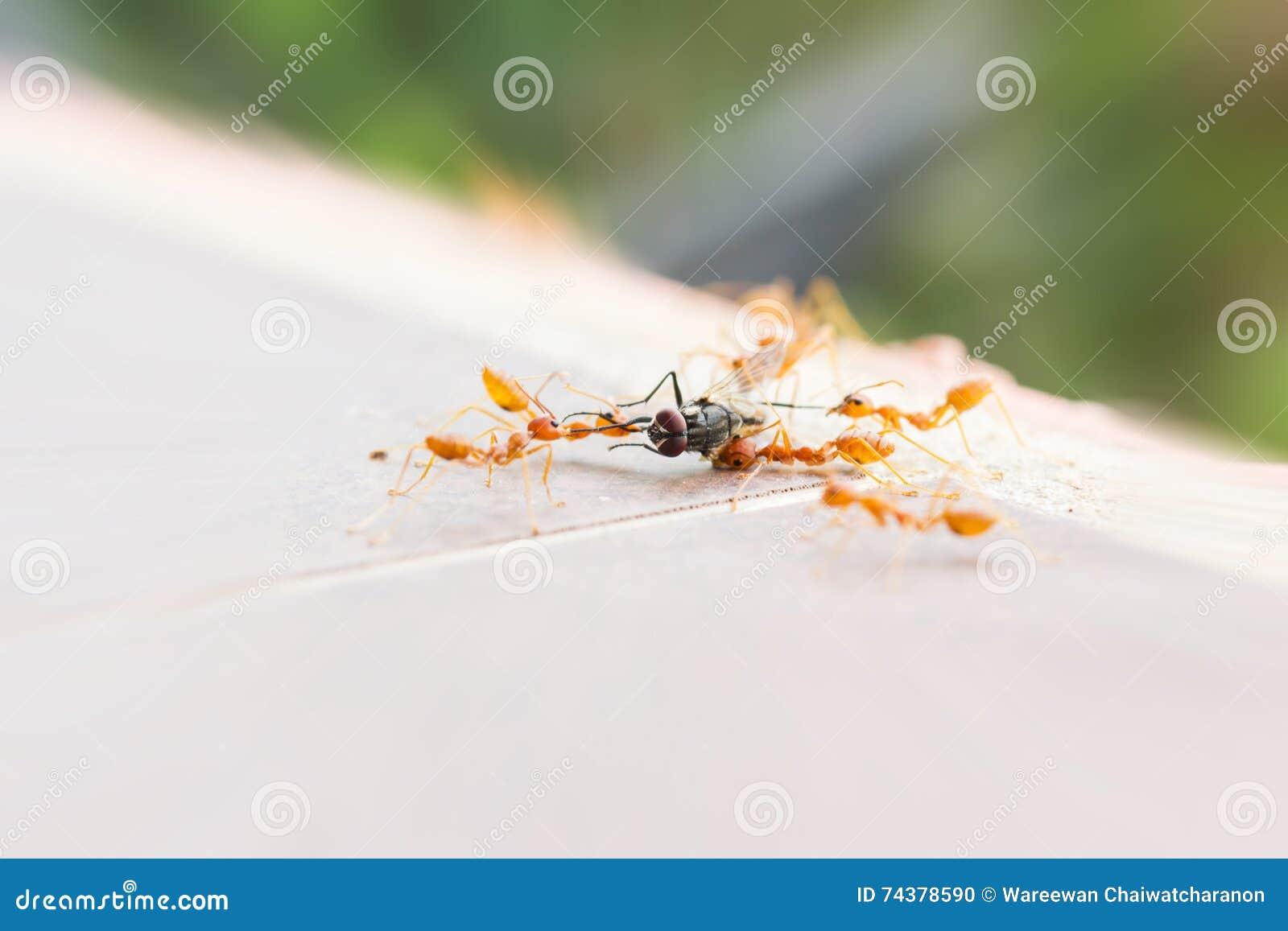 Tengo hormigas en casa elegant remedios naturales gana la - Cuanto dura la mala suerte ...