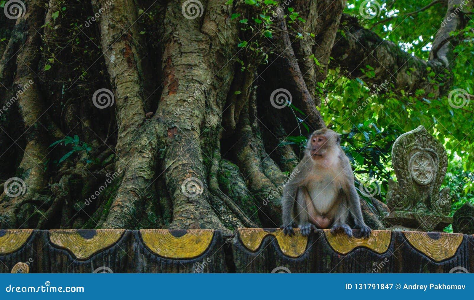 Sad Abandoned Monkey Sitting On The Side Of The Road