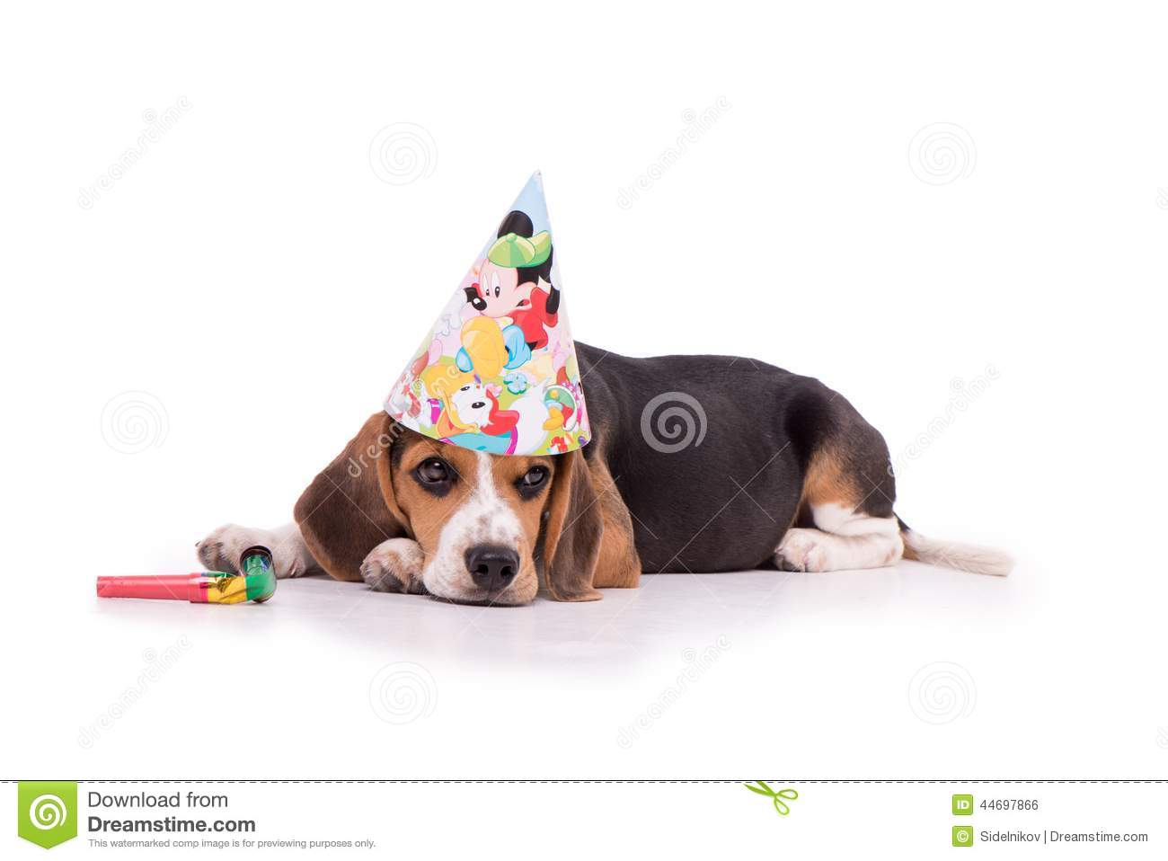 Sad Dog Lying On White Background With Happy Birthday Hat