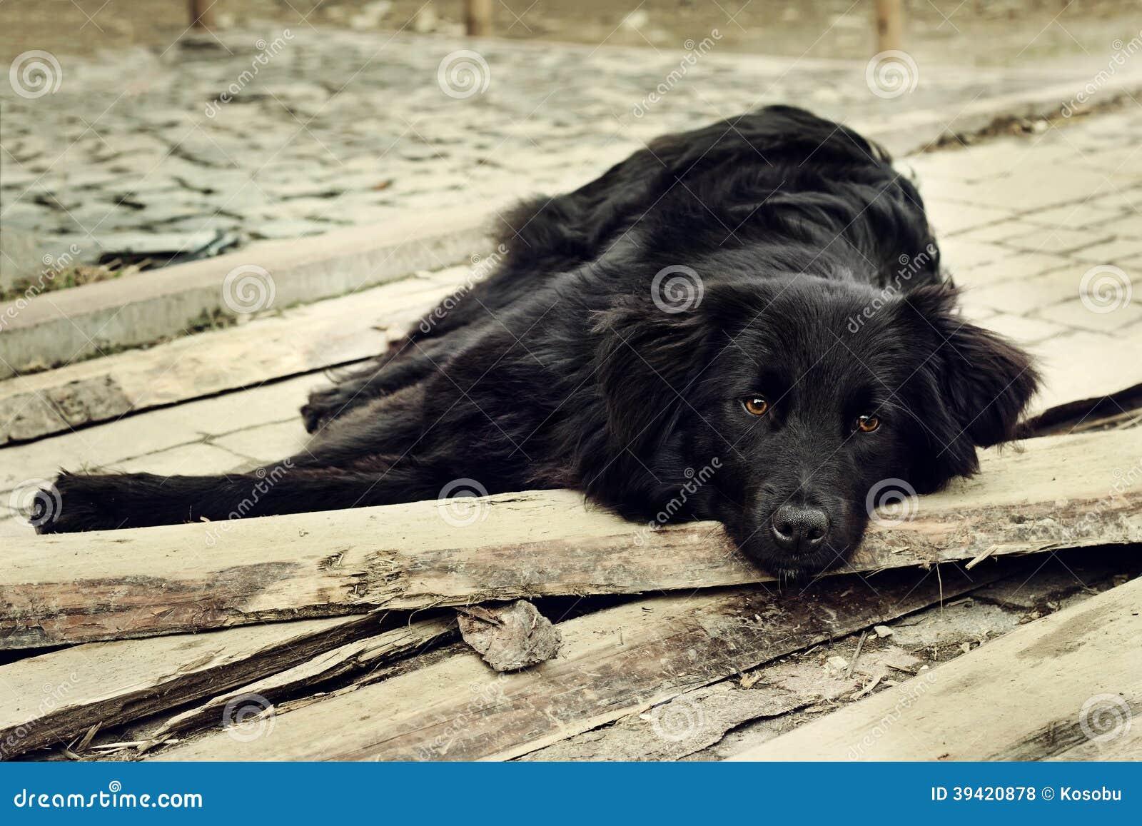 sad black dog is laying on outdoors stock photo - image: 39420878