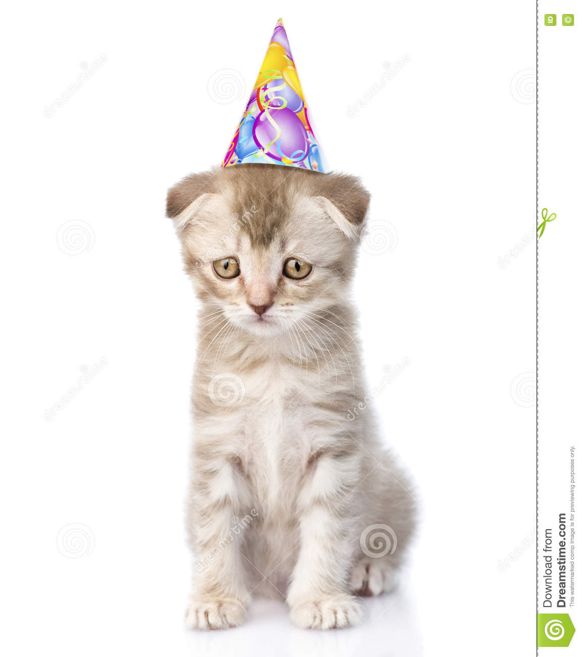 Sad Cat With Birthday Hat Isolated On White Background