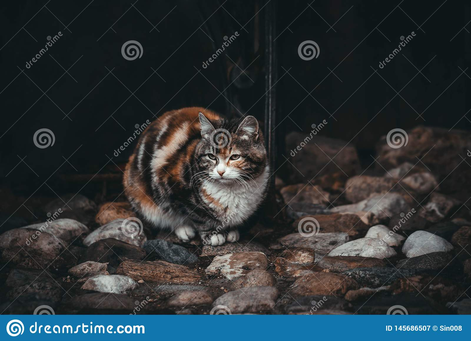 Sad cat on a black background. Waiting for the owner. Beautiful colorful cat on colorful stones. Street cats