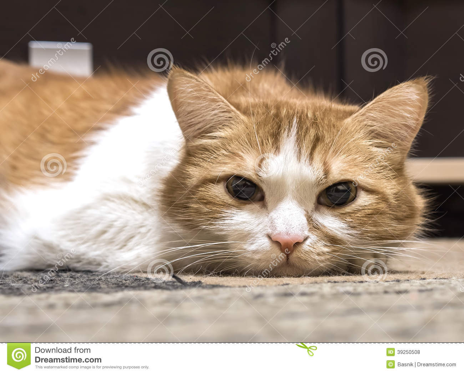 can u give a cat benadryl