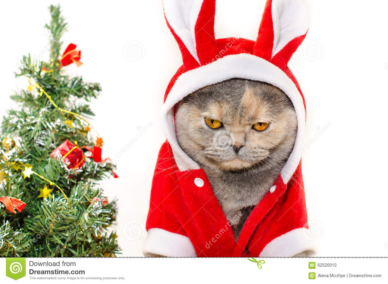 Christmas Cat Stock Download 10 123 s