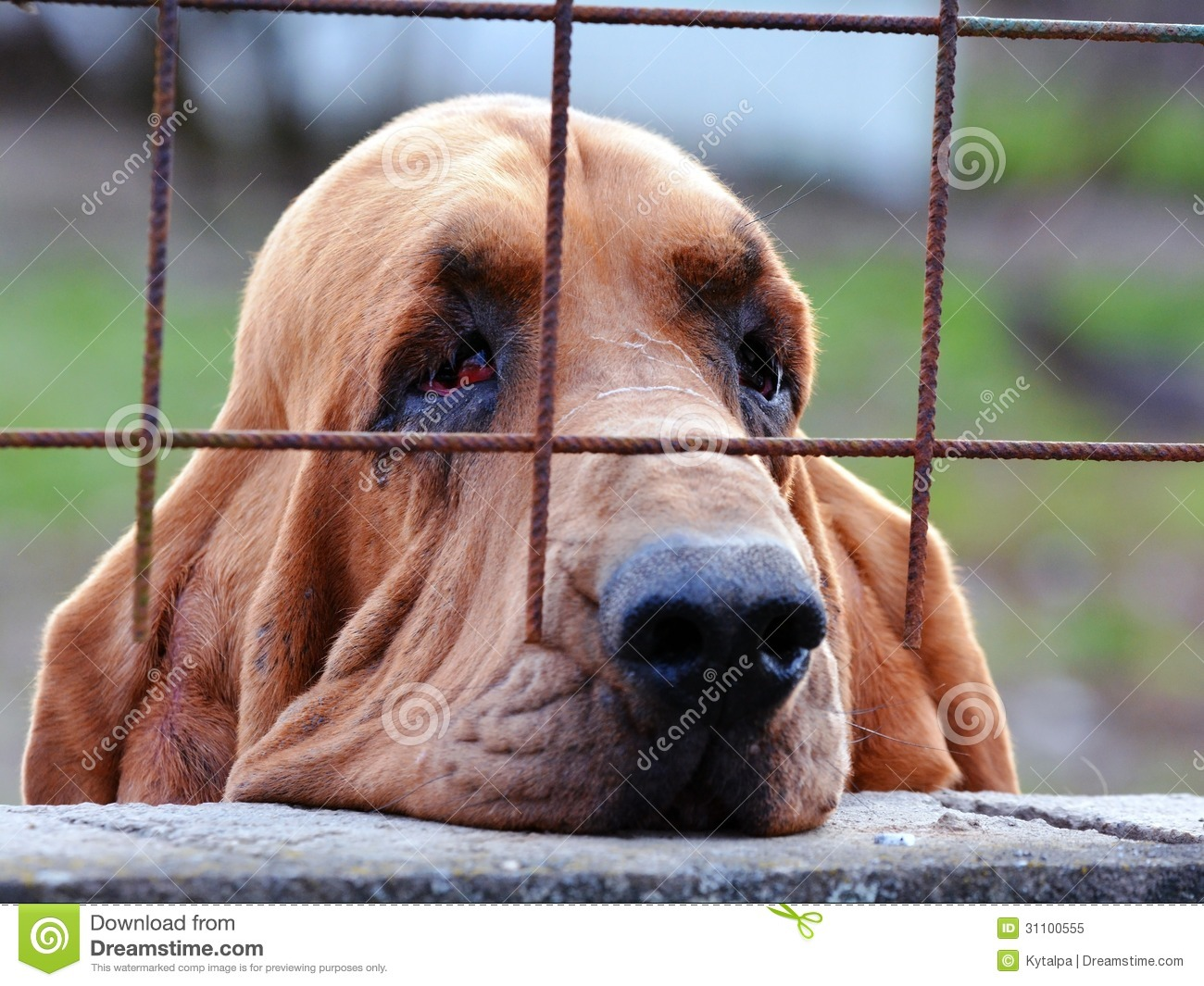 Sad Looking Dog Breed