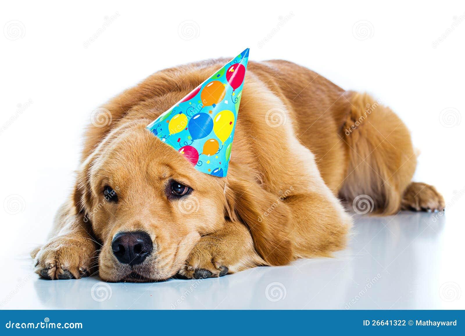 Sad Dog Birthday Party Stock Images