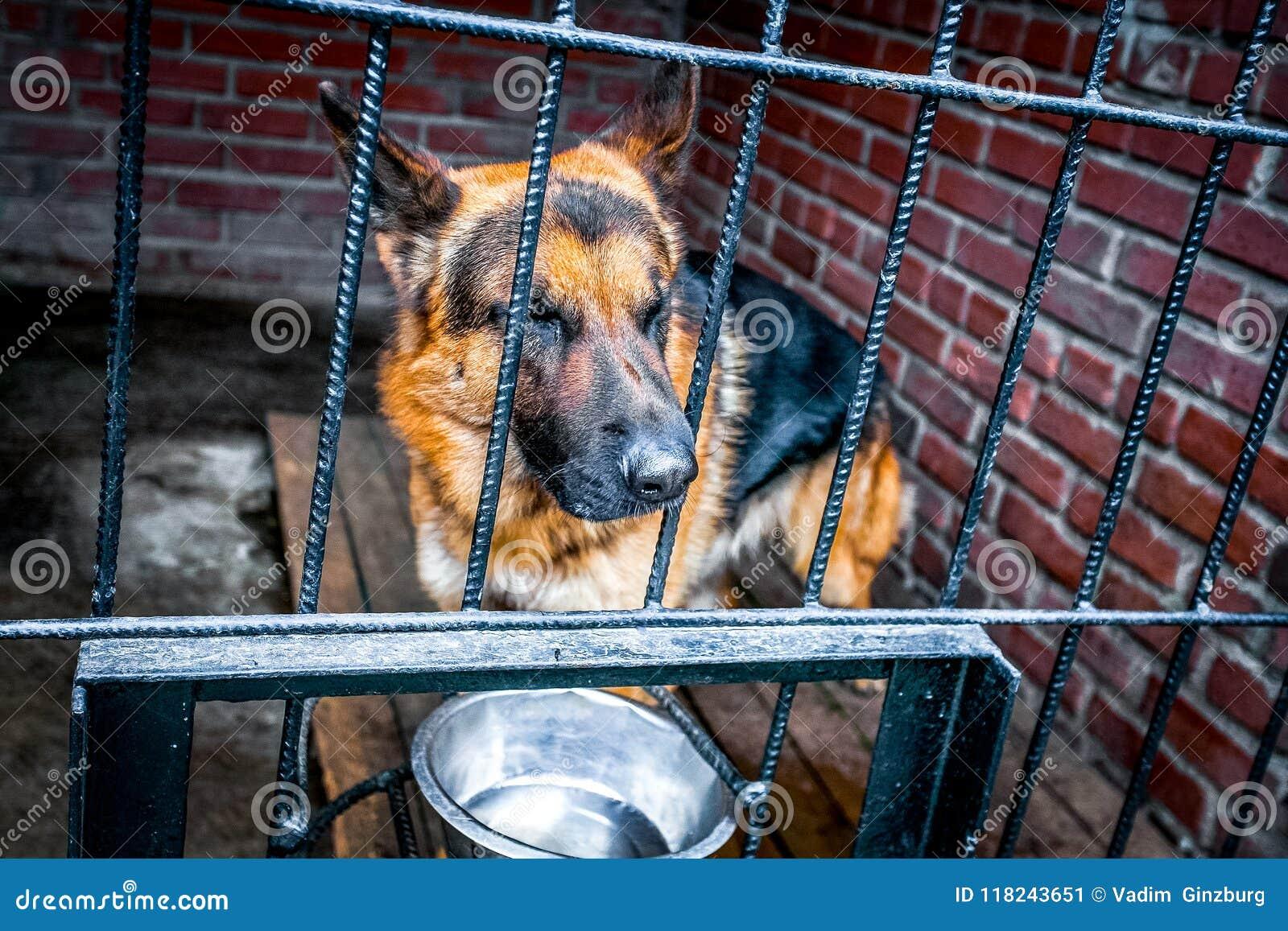 Sad dog german shepherd in a cage