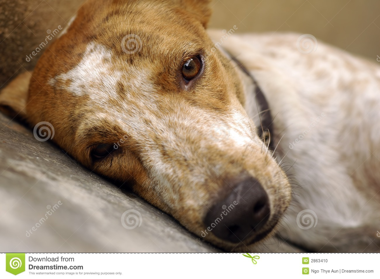 Sad Dog Sleeping stock photo. Image of sleeping, depress ...