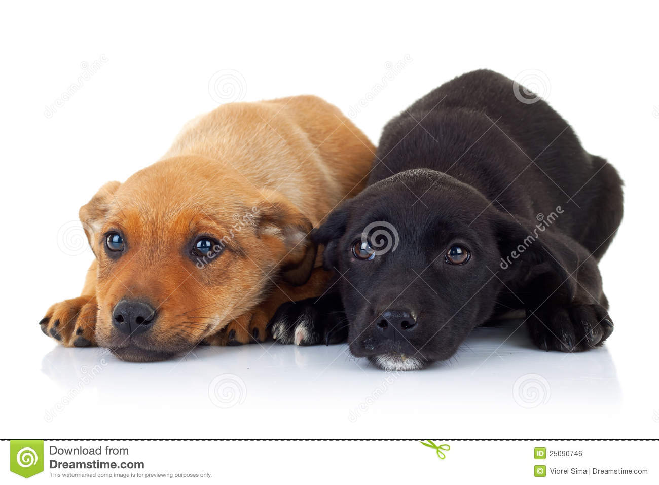 Sad Faces Of Two Stray Puppy Dogs Stock Photo - Image ...