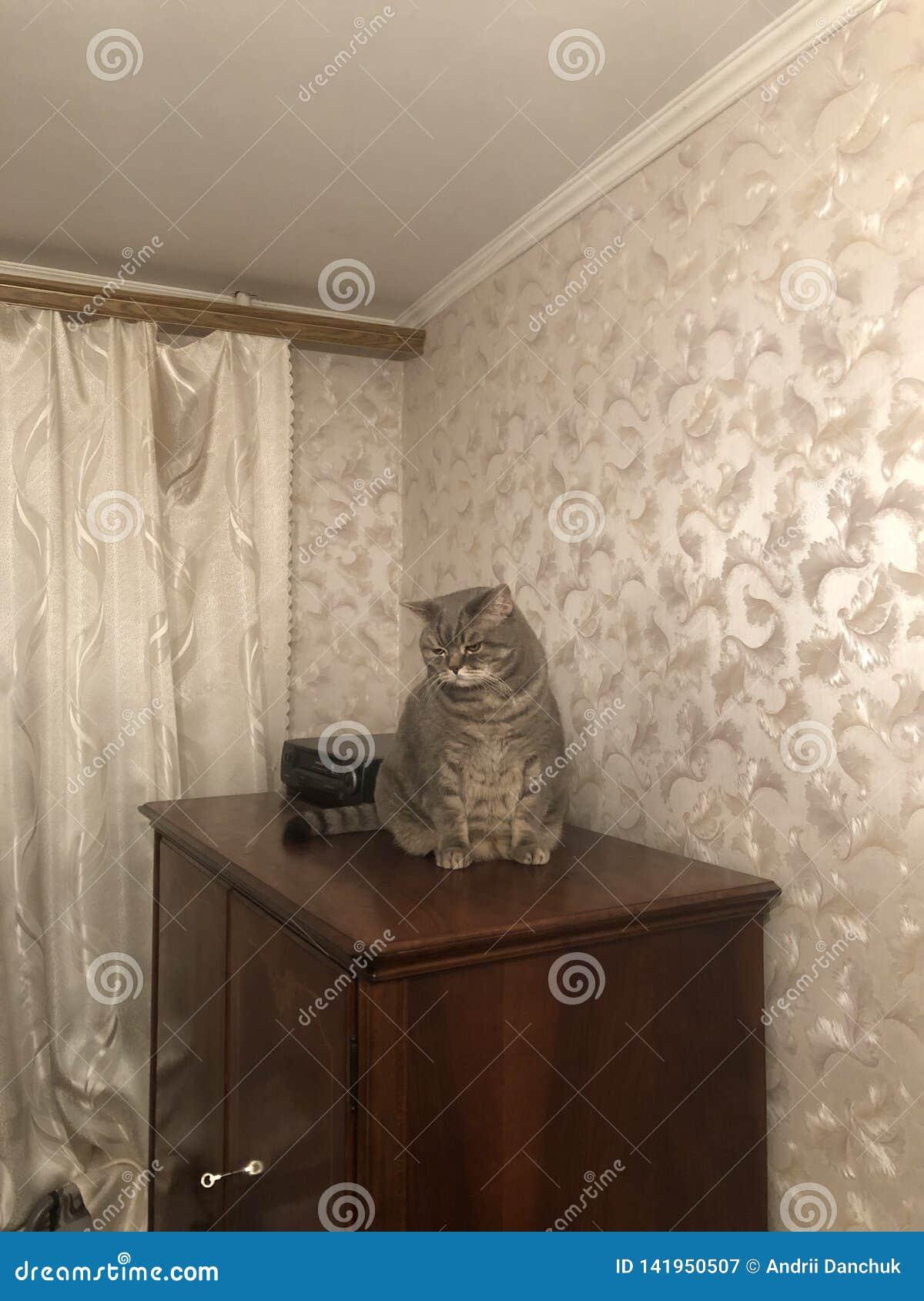 Sad gray cat sitting on the linen closet. Pet