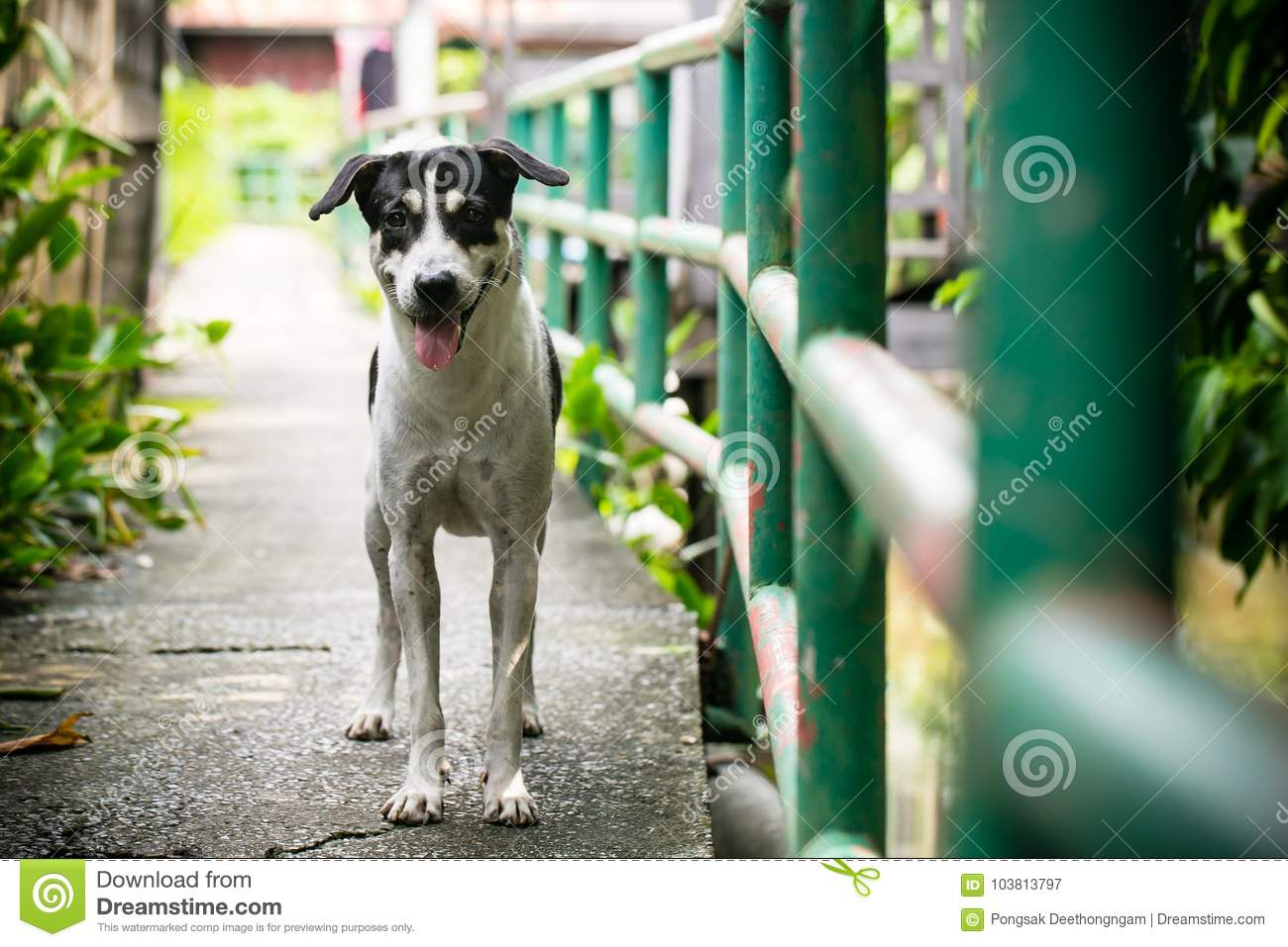 Outstanding Sad Homeless Stray Dog Stock Image Image Of Outdoor 103813797 Download Free Architecture Designs Intelgarnamadebymaigaardcom