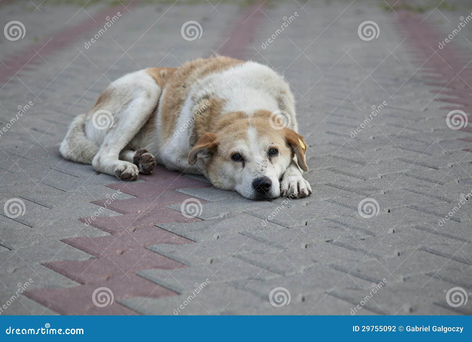 Sad Homeless Stray Dog Stock Photography - Image: 29755092
