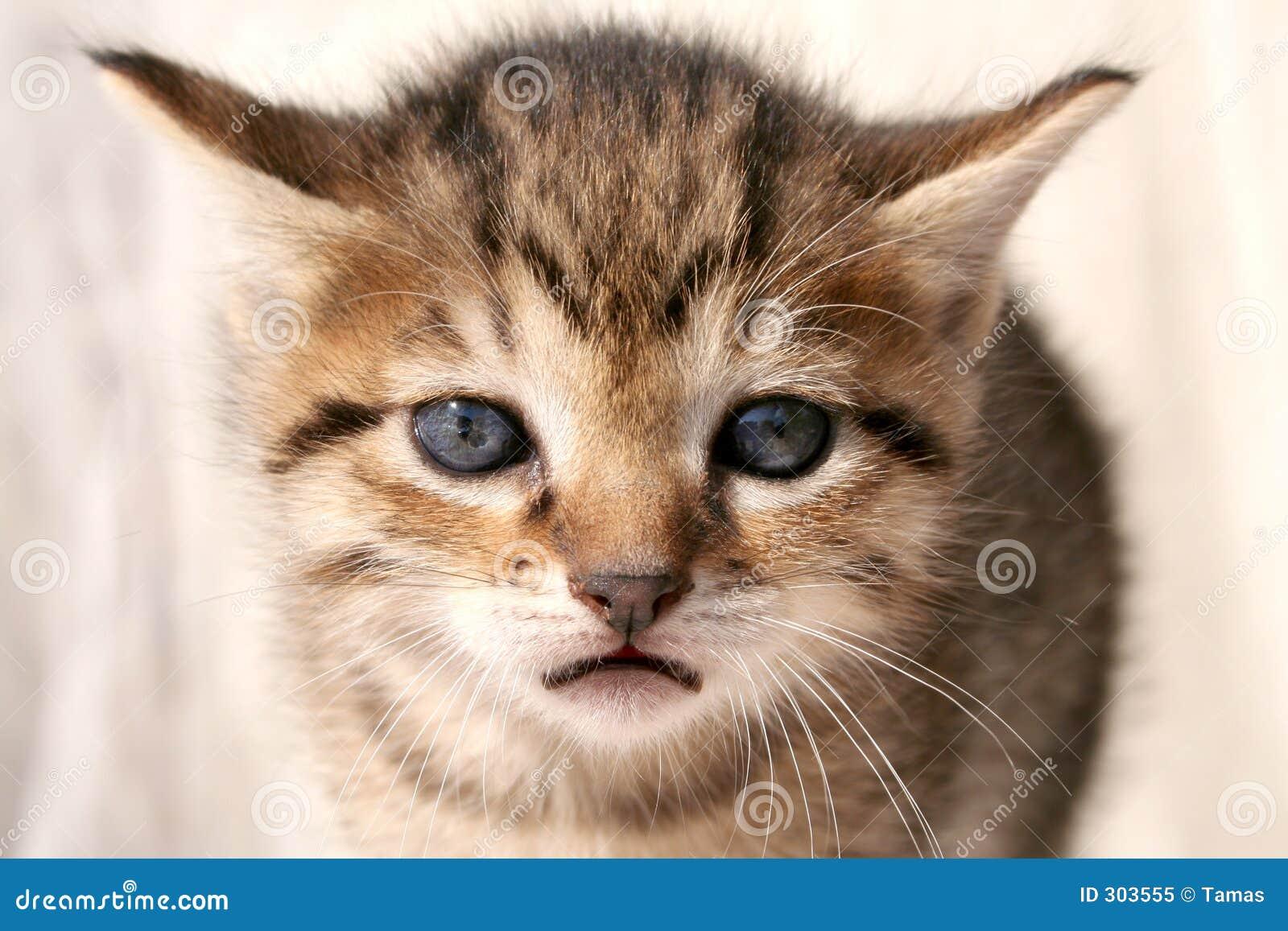SAD kattunge