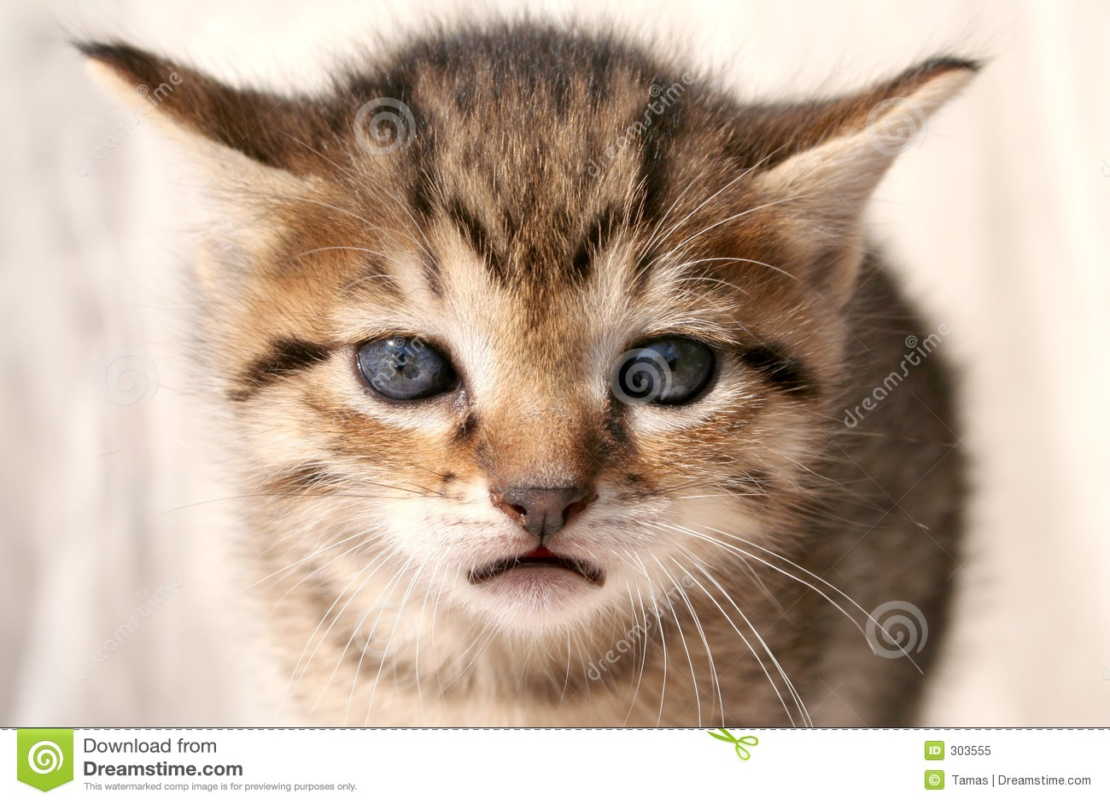 Very Sad Cat Pictures