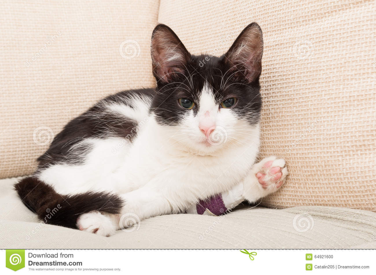cat broken leg stock images 76 photos