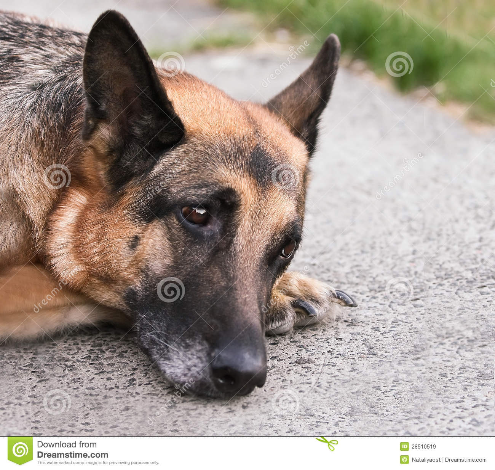Sad lonely dog on asphalt plates