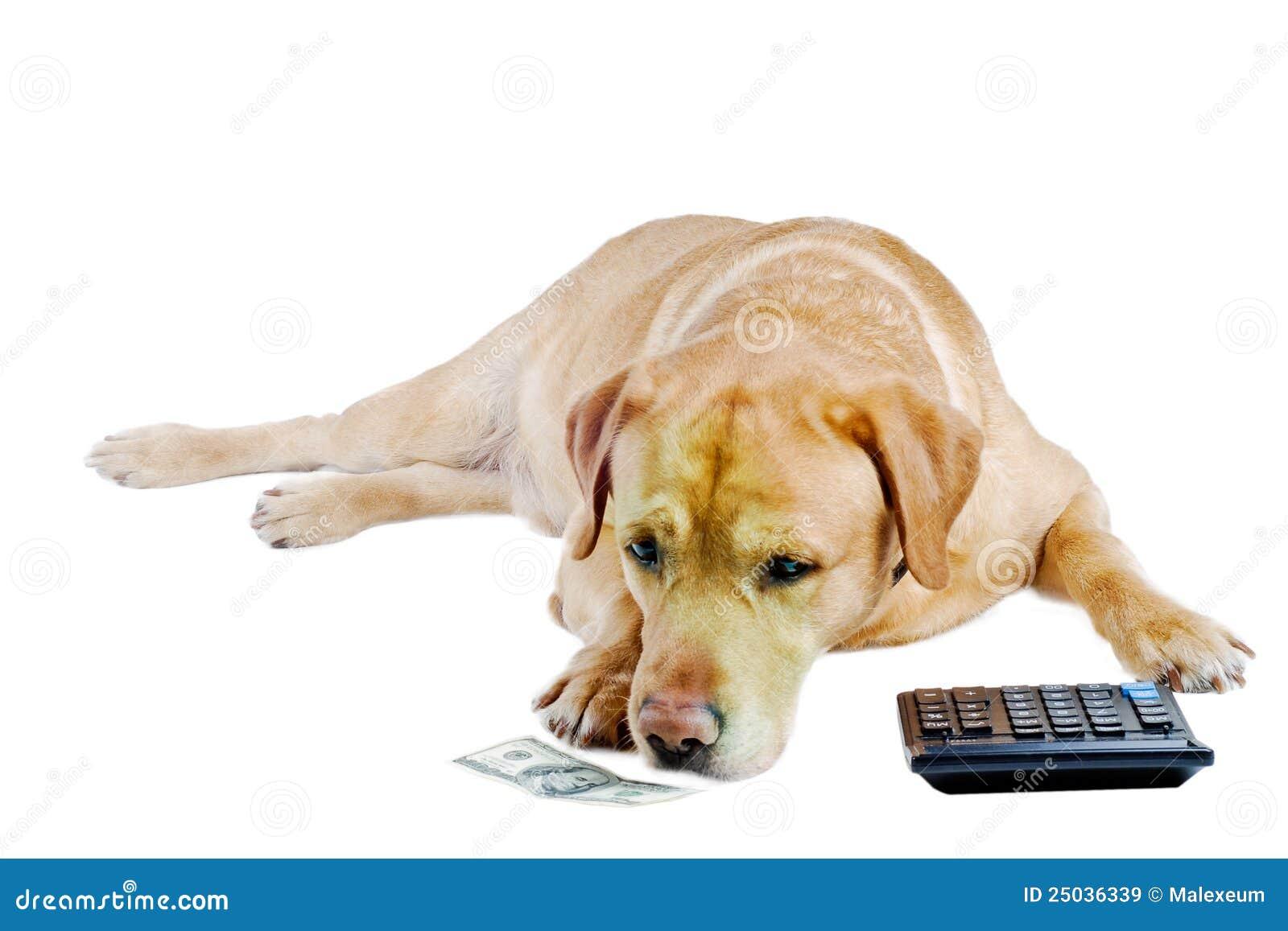 SAD räkningshundpengar
