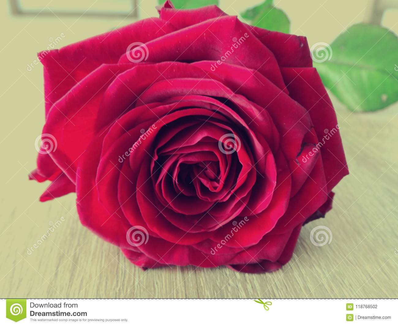 3 802 Sad Red Rose Photos Free Royalty Free Stock Photos From Dreamstime