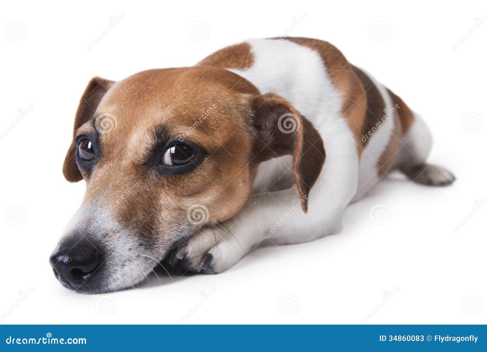 Dog Breed With Sad Eyes